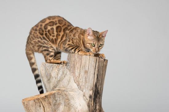 Colo cat 10
