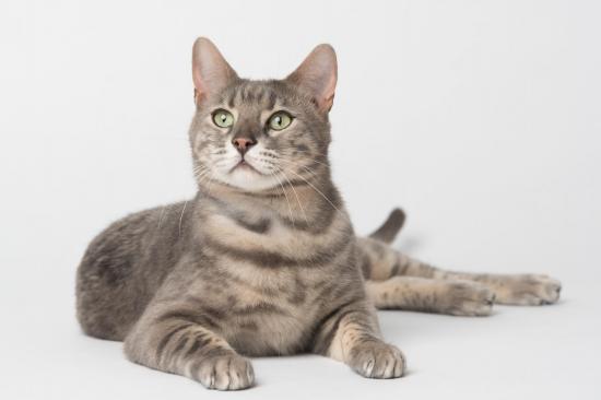 Colo cat 2