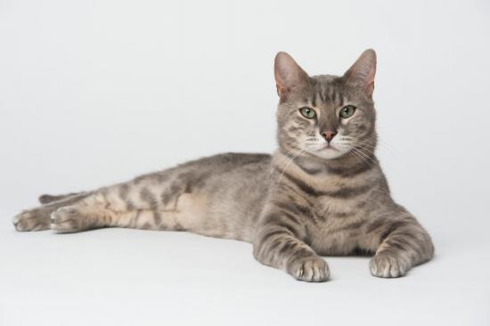 Colo cat 6