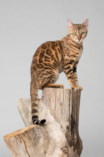 Colo cat 9